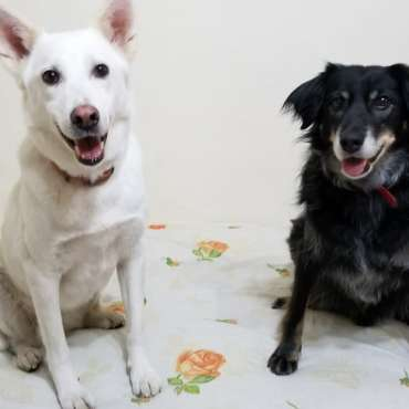 Ziko and Ulka